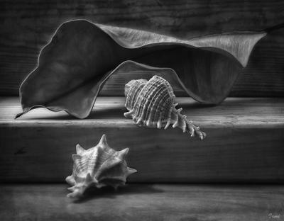 как же всё-таки мы все похожи! ракушки морские сухой лист фикуса деревянные бруски настроение