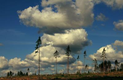 после бури ураган сосны тучи лес