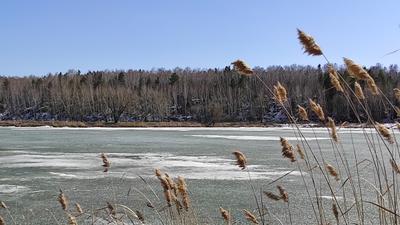 *** весна озеро лед снег лес камыши