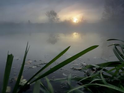 Речной рассвет.... река туман утро свет