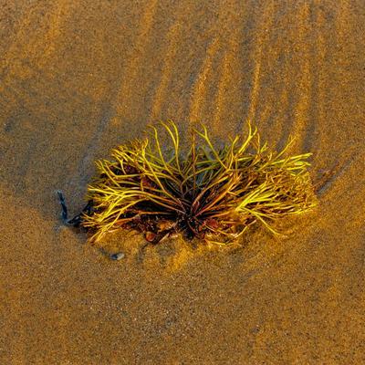 Цветы водоросли цветы зеленый песок тени отлив вода море пляж