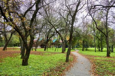 Осенний парк в Херсоне осень парк природа листья херсон