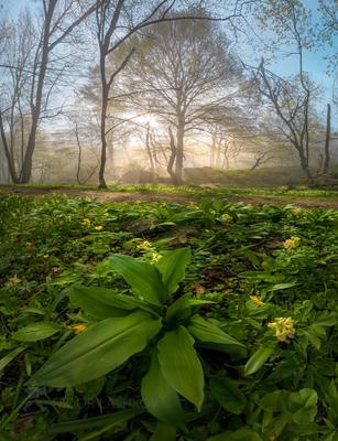Весеннее пробуждение Ставропольский край Ставрополье весна Стрижамент рассвет солнце лучи туман лесное растение растительность хохлатка дерево эко тропа туманный