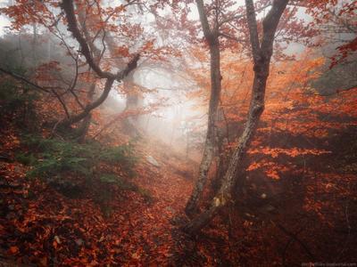 Подводный мир Ай-Петри крым осень лес туман пейзаж украина россия ай-петри утро облака