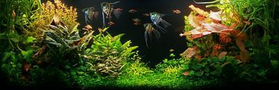 Растительный аквариум Растительный аквариум