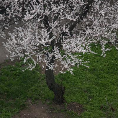 Букет весна букет