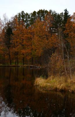 Осенний вечер. осень озеро желтые листья