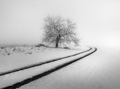 Зимняя графика Чёрно-белое пейзаж дорога зима снег дерево одно путешествие путь графика иней