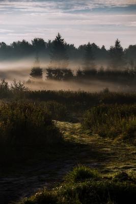 По дороге в магический лес Природа пейзаж туман лес дорога