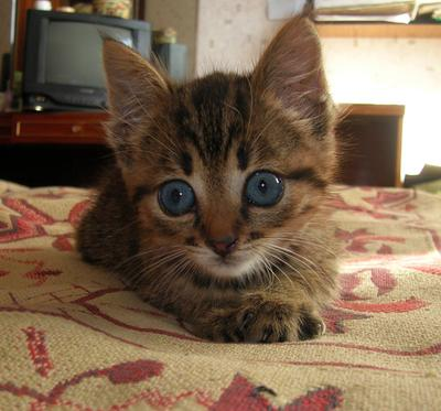 удивлённое кот