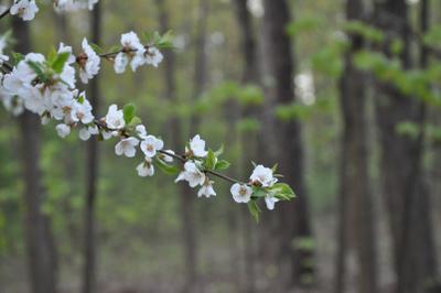 ***весна в парке