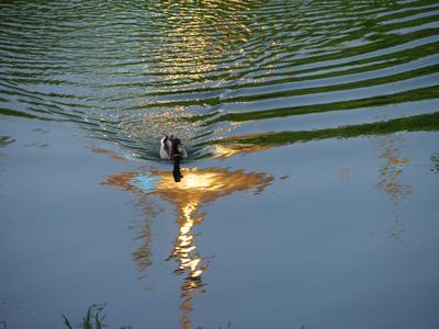 Золотой пруд
