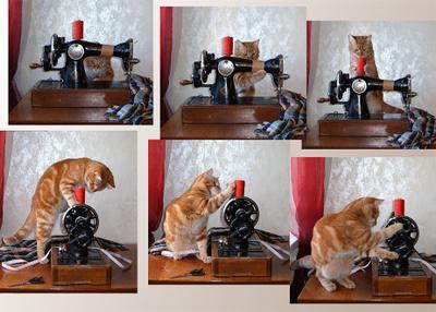 Красиво шить не запретишь кот машинка шитье