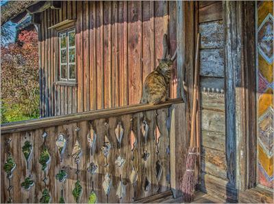 Котейко перед входом в дом в музее этнографии fitter36 латвия рига этнографический музей