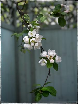 цветочно-яблочная карточка