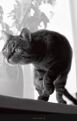 Pixel cat,morning,light