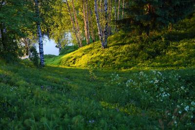 Спуск к реке теплый вечер река пейзаж