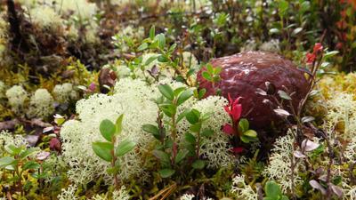 Спрятался.. Осень белый гриб боровик