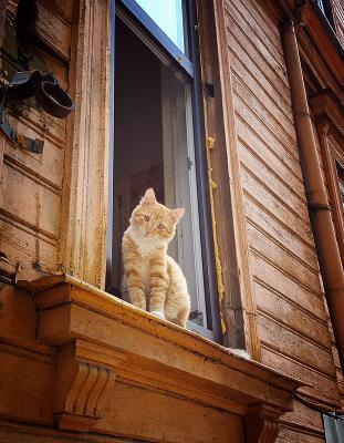 Pыжий кот Pыжий кот