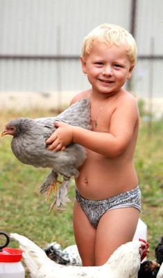 ***пернатая подружка внук, курица