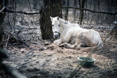 *** Город Киев Лошадь грусть печаль конюшня жанр животные