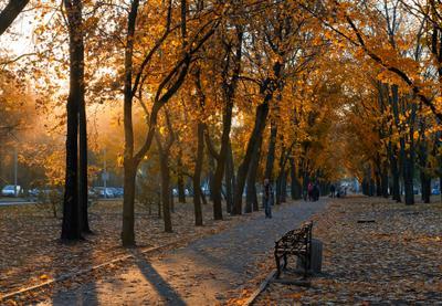 осень в Донецке пейзаж осень город аллея
