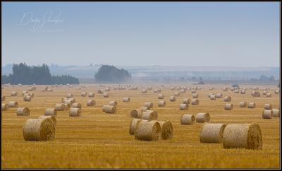 Ивановская область, близ села Бородино. поле Ивановская урожай рулоны стога сено