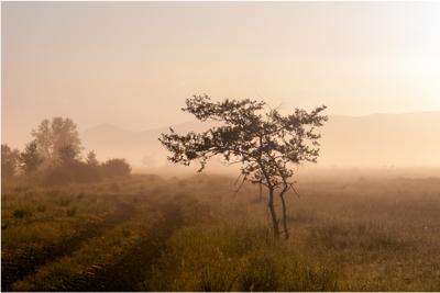 Утренний туман Хакасия пейзаж лето утро туман дерево рассвет mamanna2007
