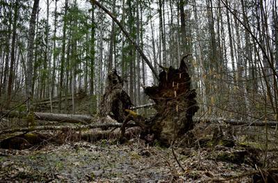 Мордовские дебри. мордовия природа мордовии лесная зона