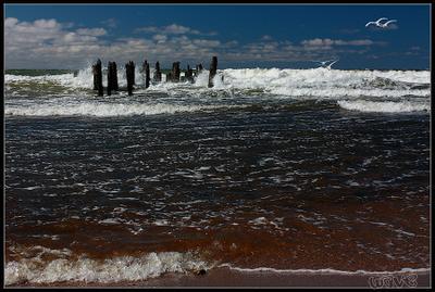 Там, где рождается ветер... ветер лебеди Балтийское море Латвия