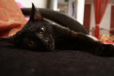 Жулик Кот черный большие красивые глаза