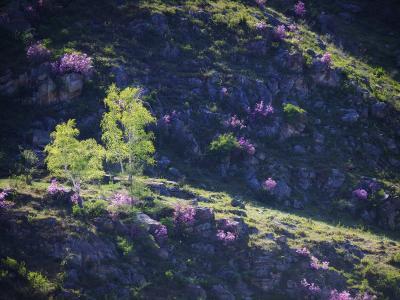 ...Алтайская весна....