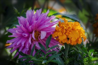 Симпатичная пара. природа цветы