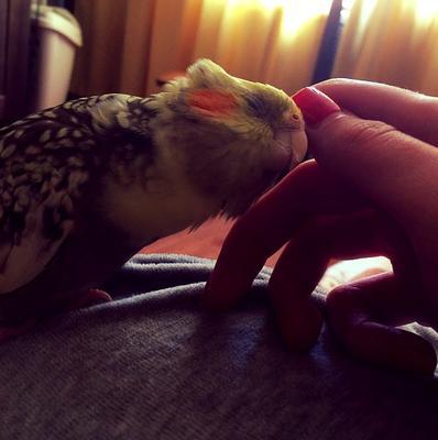 *** Животные попугай птица