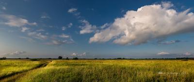 Летняя панорама летний пейзаж