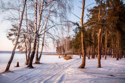 В вечерней тональности пейзаж природа зима вечер дорога лес сосна берёза водохранилище солнце мороз