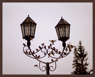 Маэстро Воробьи столб фонари птицы
