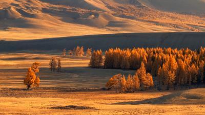 Золото Курайской долины... пейзаж Алтай горы осень