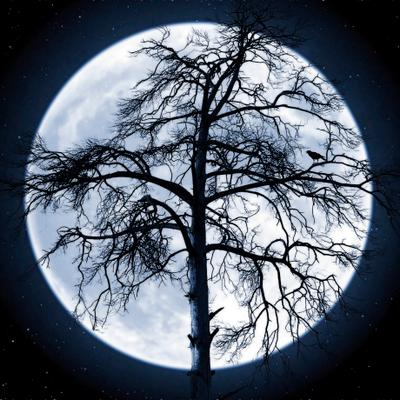 Мёрзнут голые деревья Мёрзнут голые деревья осень холодно луна ночь облетела листва