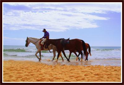 Вечерняя прогулка природа, животные, путешествия, лошади, океан