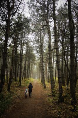 Один день осени лес осень