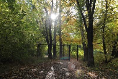 *** солнце парк сквер деревья