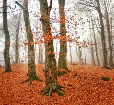 *** Лес деревья закат туман