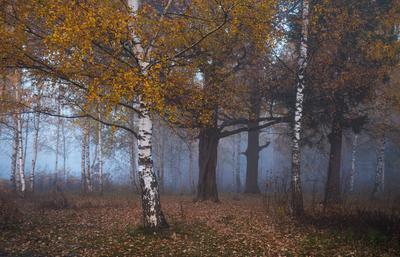 осеннее утро утро туман осень Фрязино Гребнево