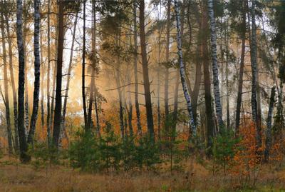 туман уходит осень лес деревья утро туман