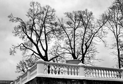 Ноябрь в Петергофе. Петергоф Петродворец осень деревья