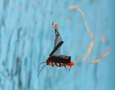 ***Долетался природа насекомые