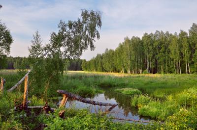 Июнь на болотах июнь болота вечер