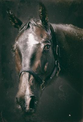 портрет_♞ лошадь конь жеребец портрет