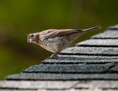 А не подгляяядывай! животные птицы пернатые